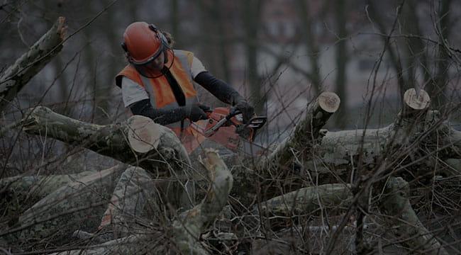 Springfield Tree Service